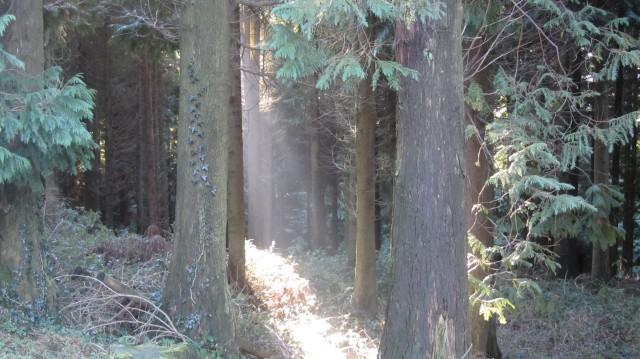 Detalle de la luz a través del bosque